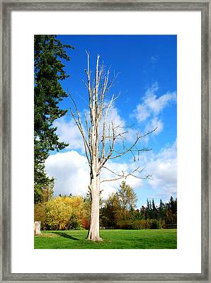Life Has Done Framed Print by Sergey and Svetlana Nassyrov