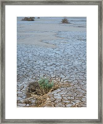 Life In A Dry Place Framed Print