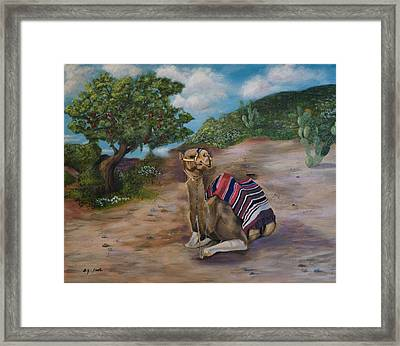 Life In Israel Framed Print by Donna Cook