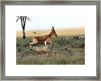 Life In The Wild Framed Print by Happy Home Artistry