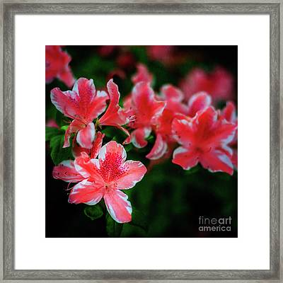 Life Is A Circus At The Azalea Festival Framed Print by Tamyra Ayles