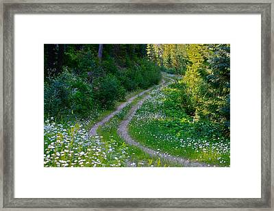 Life Is A Journey On A Road Lined With Daisies Framed Print by Karon Melillo DeVega