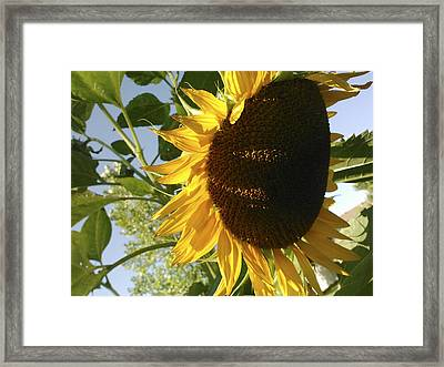Life Is Good Framed Print by Jane Autry