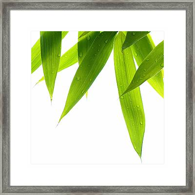 Life Is Green Framed Print