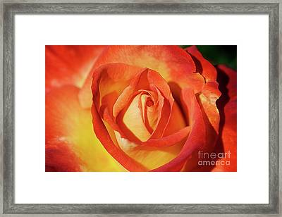 Life Is Like A Rose Peeping Through The Hardships Of Life To Bloom With Color Framed Print by Fir Mamat