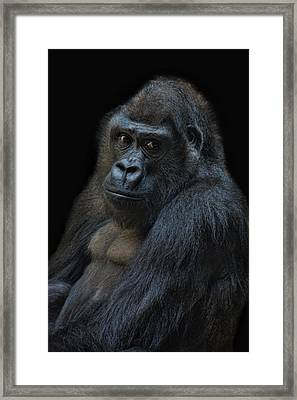 Life Is Not Allways Funny Framed Print by Joachim G Pinkawa