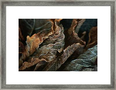 Life Lines - Nature Abstract Framed Print by Nikolyn McDonald