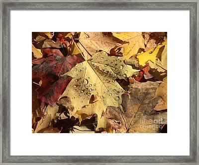 Life Never Fall-s Framed Print