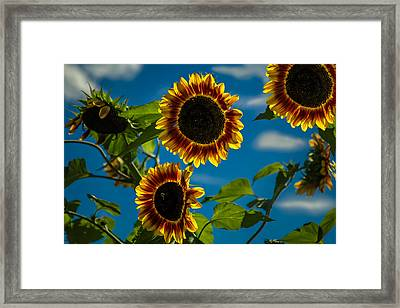 Framed Print featuring the photograph Life Of A Bumble Bee by Jason Moynihan