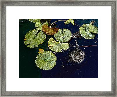 Life Of A Lily Pad 3 Framed Print by Nicholas J Mast