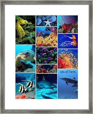 Life Of Terra Framed Print