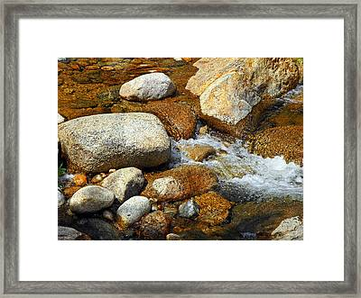 Life Of The Riverbed Framed Print by Lynda Lehmann