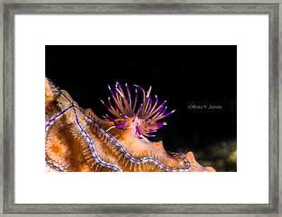 Life On A Reef Framed Print