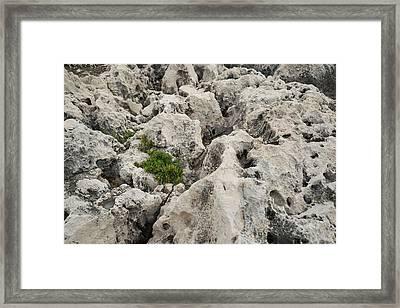 Life On Bare Rock - Weathered Limestone And Little Green Survivors Framed Print by Georgia Mizuleva