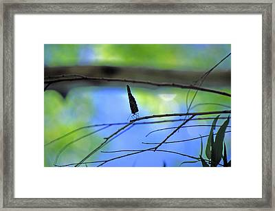 Life On The Edge Framed Print