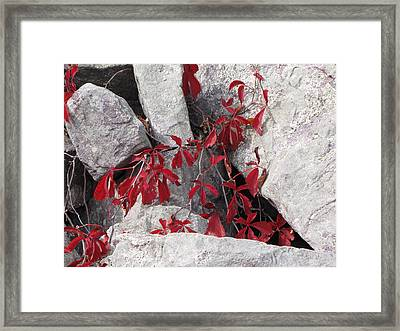 Life On The Rocks Framed Print by Sylvia Wanty