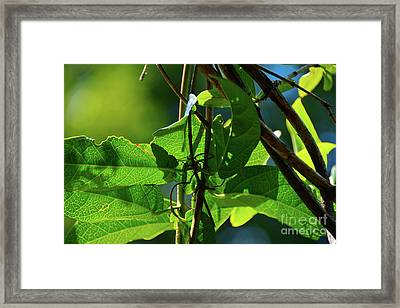 Life Path Framed Print by Robyn King
