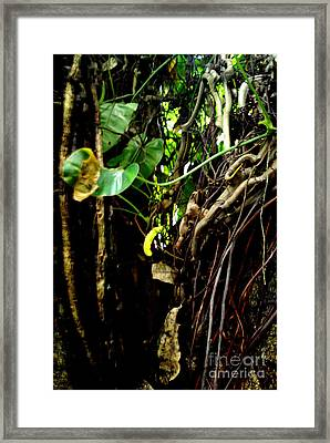Framed Print featuring the photograph Life by Rushan Ruzaick