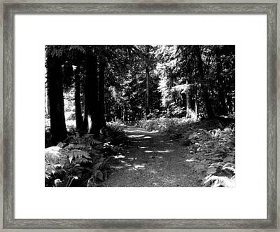 Life Tures  Bw Framed Print by Ken Day