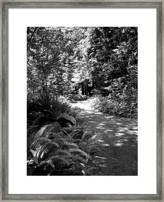 Life Twist And Tures  Bw Framed Print by Ken Day
