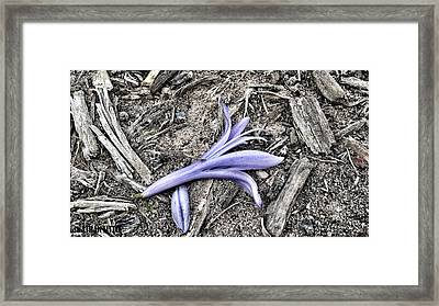 Lifeless Beauty Framed Print