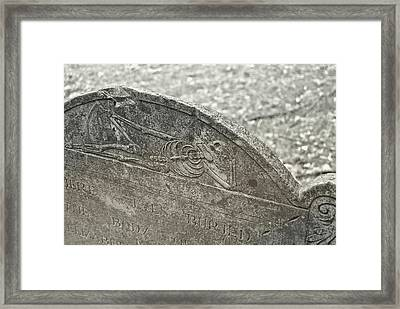 Life's Brevity Framed Print by JAMART Photography