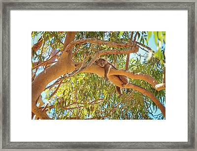 Framed Print featuring the photograph Life's Hard, Yanchep National Park by Dave Catley