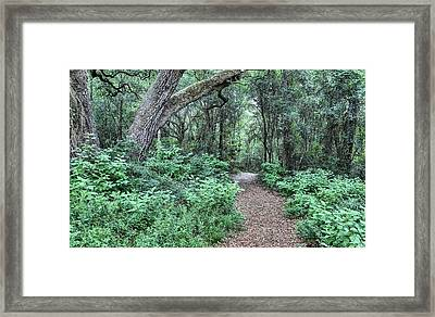 Life's Pathways Framed Print by JC Findley
