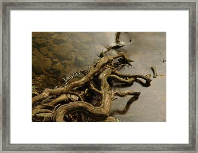 Life's Twist Framed Print