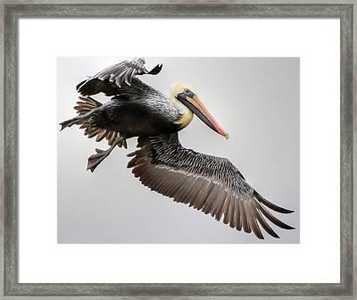 Lift Off Framed Print by Charlotte Schafer