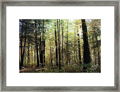 Framed Print featuring the photograph Light Among The Trees by Felipe Adan Lerma