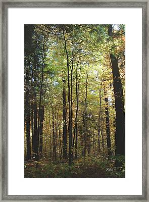 Light Among The Trees Vertical Framed Print by Felipe Adan Lerma