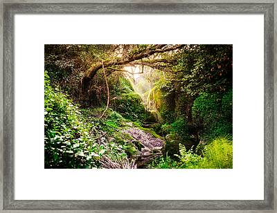 Light And Magic Framed Print by Marco Oliveira