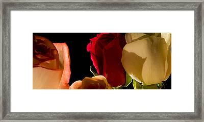 Light And Roses Framed Print