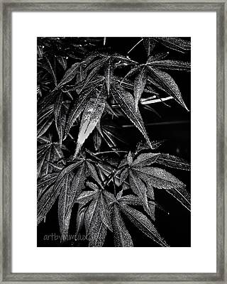 Light And Shadow 2 Framed Print
