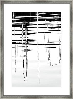 Light And Shadow Reeds Abstract Framed Print