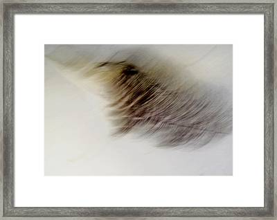 Light As A Feather Framed Print