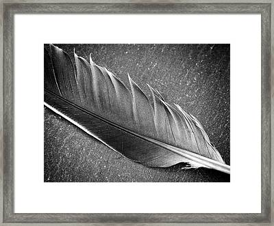 Framed Print featuring the photograph Light As A Feather by Karen Stahlros