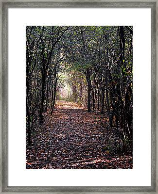 Light At The End Of The Path Framed Print