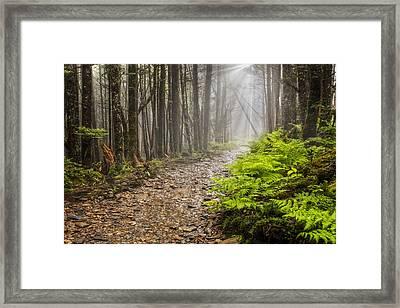 Light Beams Framed Print by Debra and Dave Vanderlaan