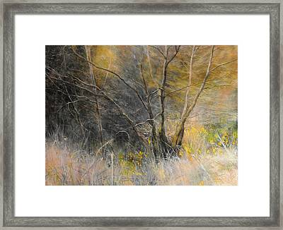 Light Behind Trees. Framed Print by Harry Robertson