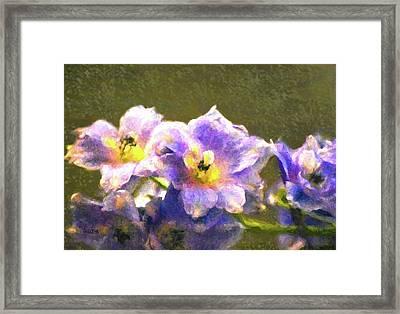 Light Blue Belladonna Delphiniums Framed Print