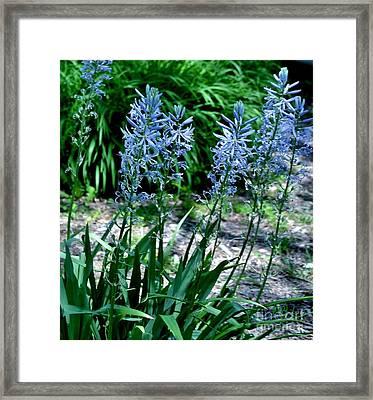 Light Blue Lace Framed Print by Marsha Heiken