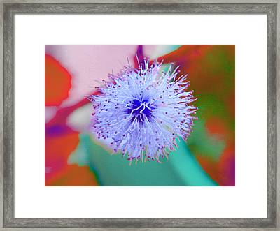 Light Blue Puff Explosion Framed Print by Samantha Thome
