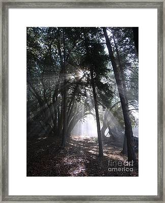 Light Cathedral Framed Print by JoAnn SkyWatcher