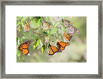 Light Cluster Framed Print