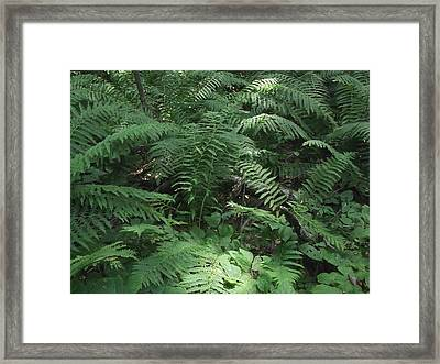 Light Finds The Forest Floor Framed Print