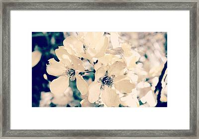 Light Flowers Framed Print by Nat Air Craft