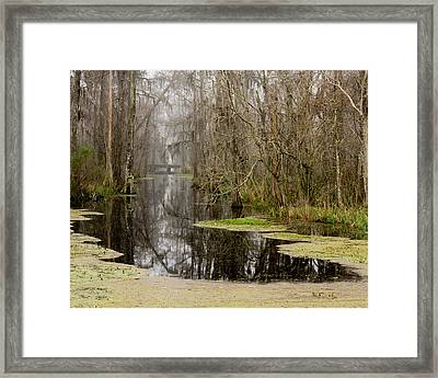 Light Fog On The Swamp Framed Print