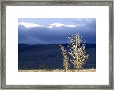 Light Hawk Framed Print